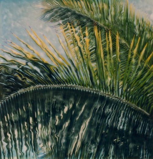 Stock Photo: 1301-470 Close-up of the leaves of a palm tree