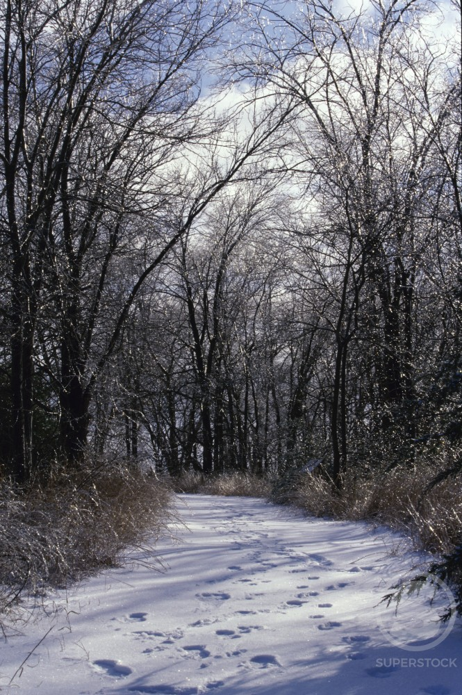 Stock Photo: 1308R-169 Path through the woods