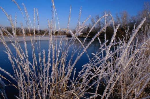 Ice formed on weed near a lake, Barber, Kansas, USA : Stock Photo
