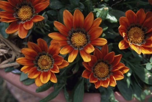 Stock Photo: 1308R-299 Close-up of flowers