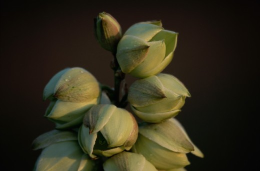 Close-up of flower buds : Stock Photo
