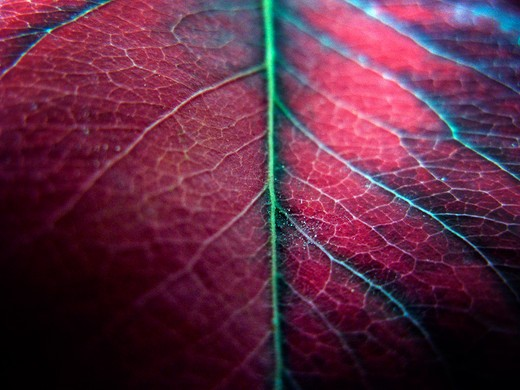 Stock Photo: 1311-2088 Detail of an autumn leaf