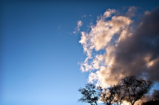 Clouds over trees, New Mexico, USA : Stock Photo