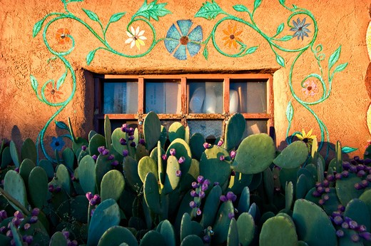 Stock Photo: 1311-2631 USA, New Mexico, cactuses in front of house