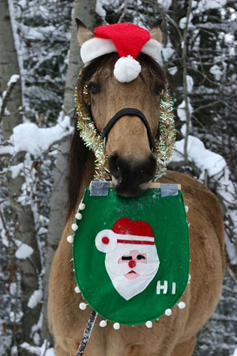 Stock Photo: 1314-253A Horse holding a banner and wearing a Santa hat