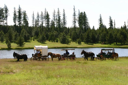 Stock Photo: 1314-332 Horse carts in a field, Wallowa Mountains, Oregon, USA