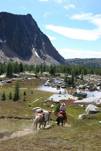 USA, Washington, Pasayten Wilderness, cowboy travelling with two horses : Stock Photo