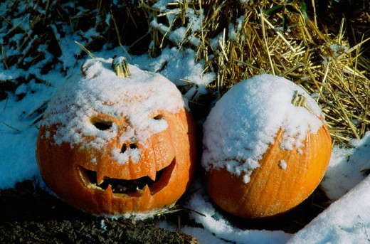 Stock Photo: 1314R-158 Close-up of two jack o' lanterns covered with snow