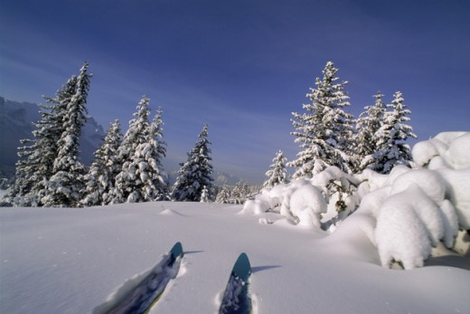 Two skis on snow, Banff National Park, Alberta, Canada : Stock Photo