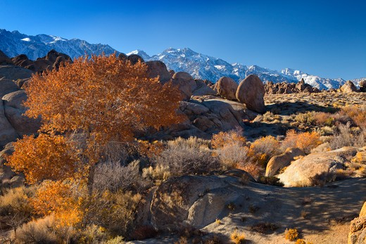 Stock Photo: 1317-1013 Autumnal trees with rock formations, Alabama Hills, Lone Pine, California, USA