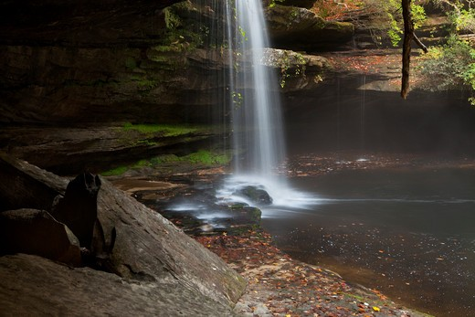 Stock Photo: 1317-1268 Waterfall in a forest, Sipsey Wilderness, Bankhead National Forest, Alabama, USA