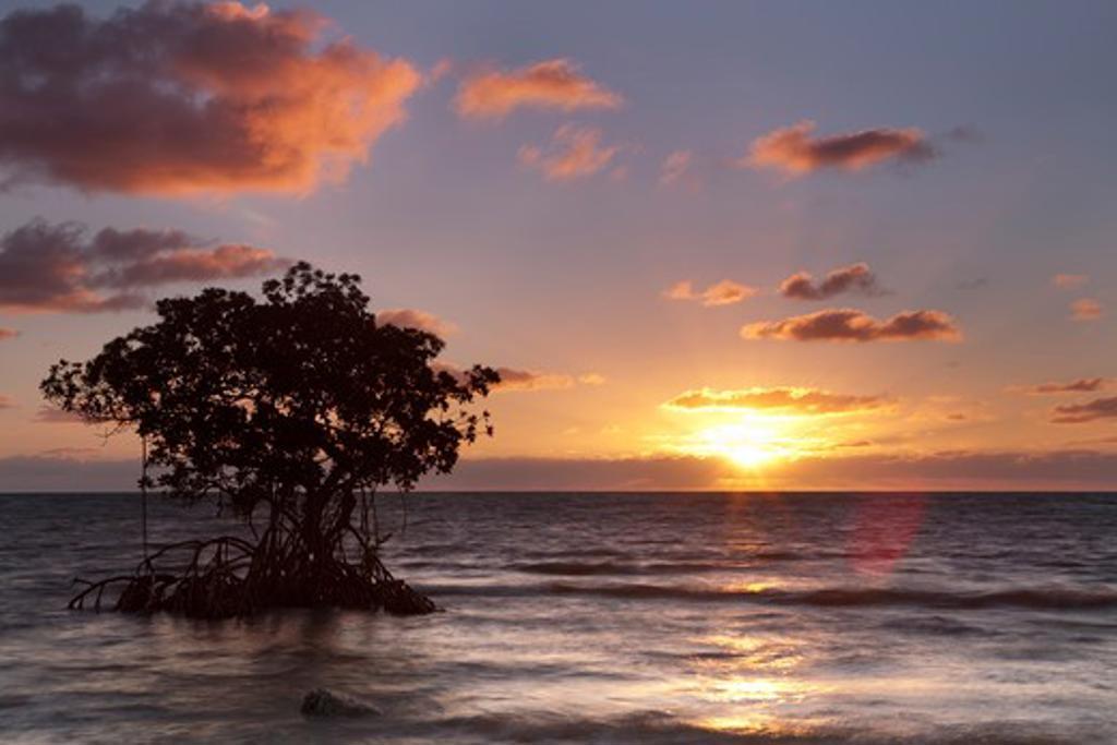 Stock Photo: 1317-1301 USA, Florida, Big Pine Key, Mangrove trees at sunrise