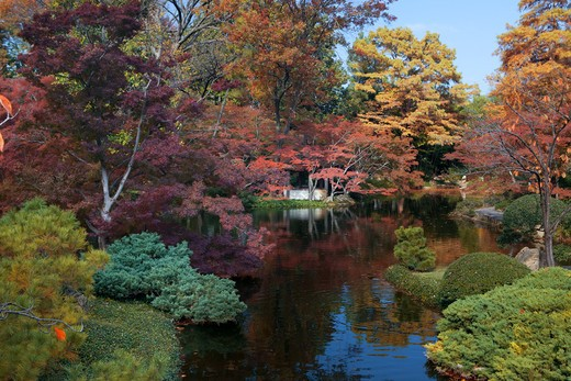Stock Photo: 1317-484 Fall colors in a garden, Japanese Garden, Fort Worth Texas, USA