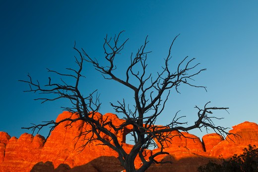 Stock Photo: 1317-498A USA, Utah, Arches National Park, View of Delicate Arch