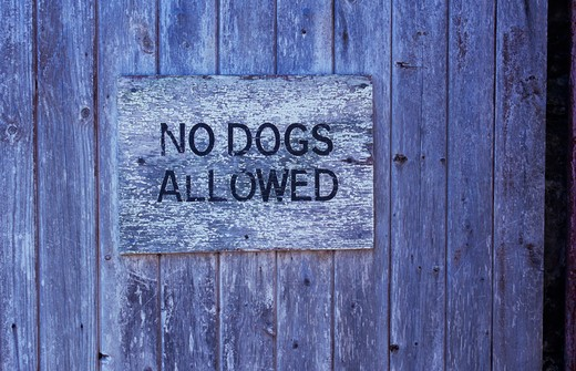 Stock Photo: 1318R-1531 UK, Wales, Dyfed, Detail of wooden gate once painted white but now bare wood with peeling sign stating No Dogs Allowed