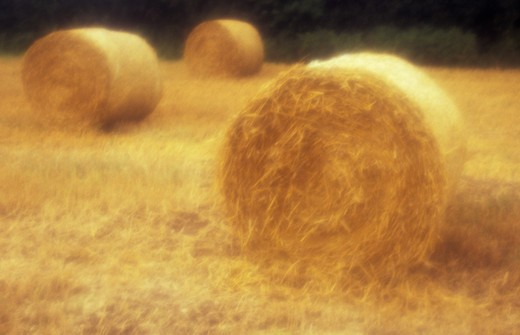 Stock Photo: 1318R-1550 UK, England, Norfolk, Hay bales in field
