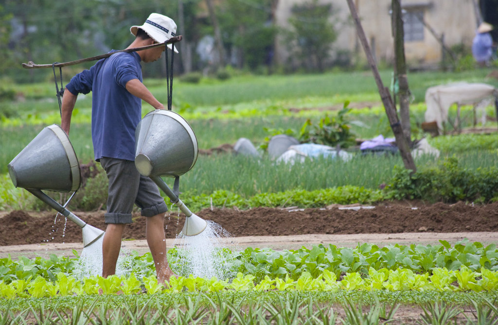 Stock Photo: 1323-1022 Farmer watering in the field, Vietnam