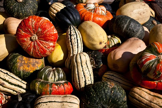 Stock Photo: 1323-1286 High angled view of gourds and squashes