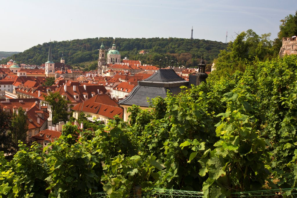 Stock Photo: 1323-2587 Czech Republic, Praque, Vineyards overlooking Mala Strana (lesser town)
