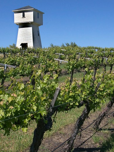 Stock Photo: 1323-625 Low angle view of an agricultural building in a vineyard, Silver Oak Cellars, Napa Valley, California, USA