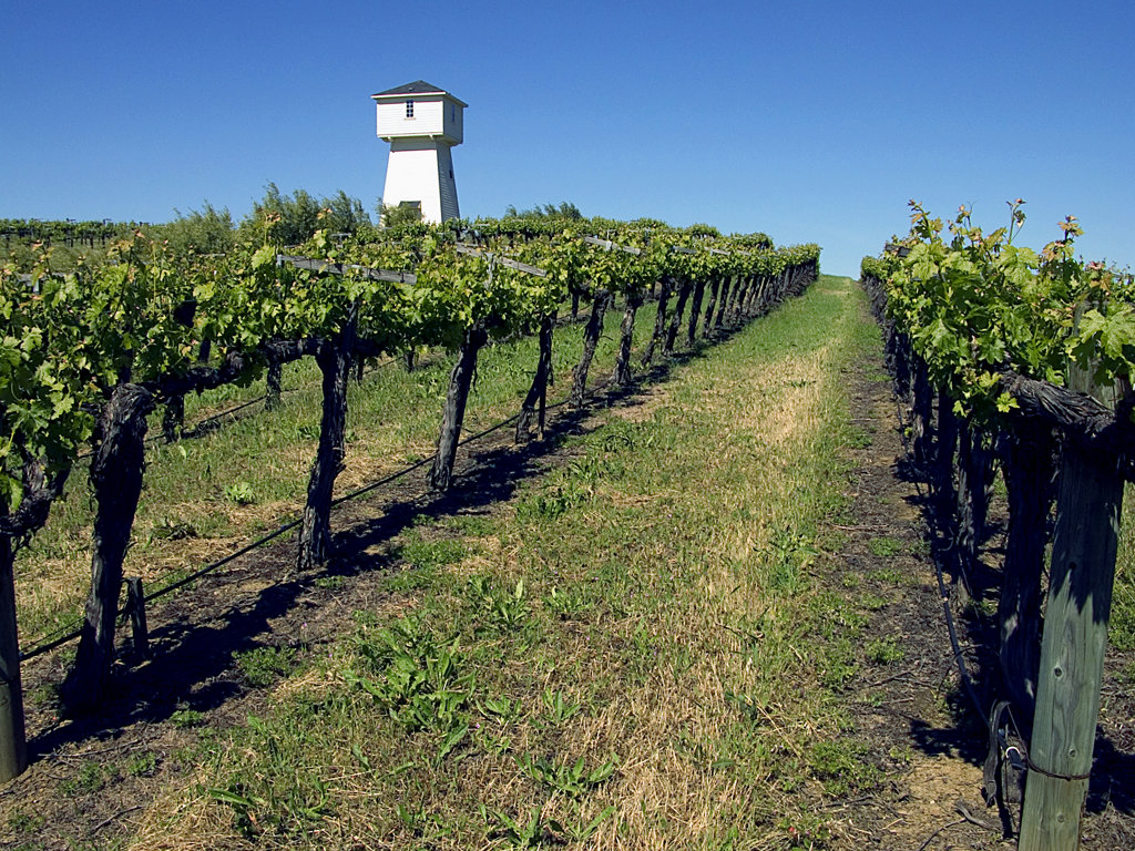 Stock Photo: 1323-626 Tower in a vineyard, Silver Oak Cellars, Napa Valley, California, USA