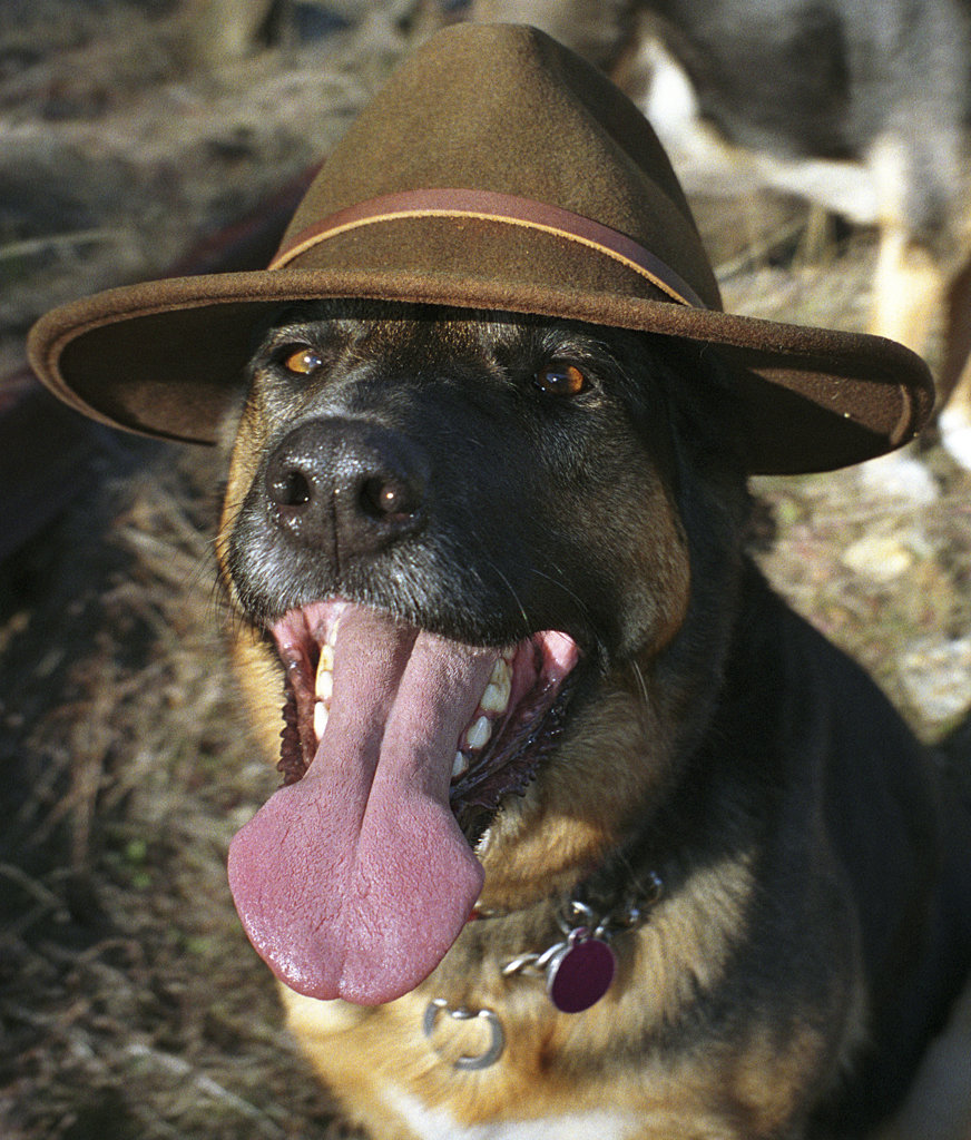 Close-up of a dog wearing a hat : Stock Photo