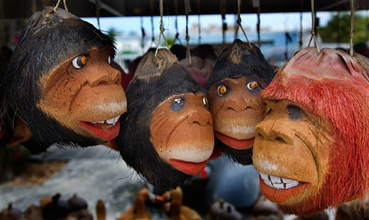 Stock Photo: 1323-714B Close-up of four coconuts carved with monkey faces