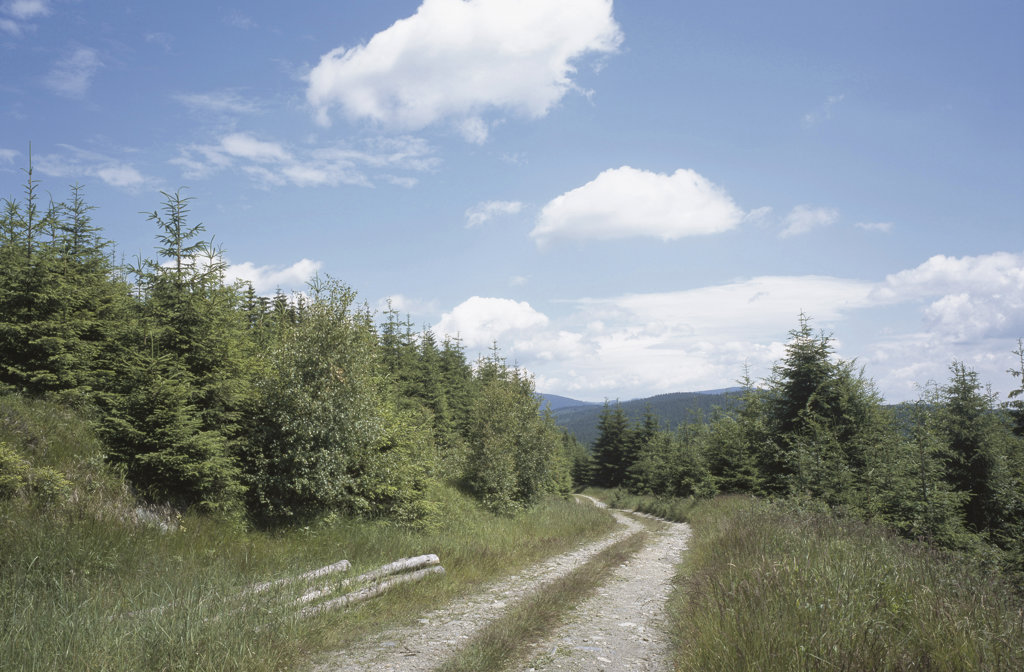 Dirt road passing through a landscape, Jeseniky Mountains, Czech Republic : Stock Photo