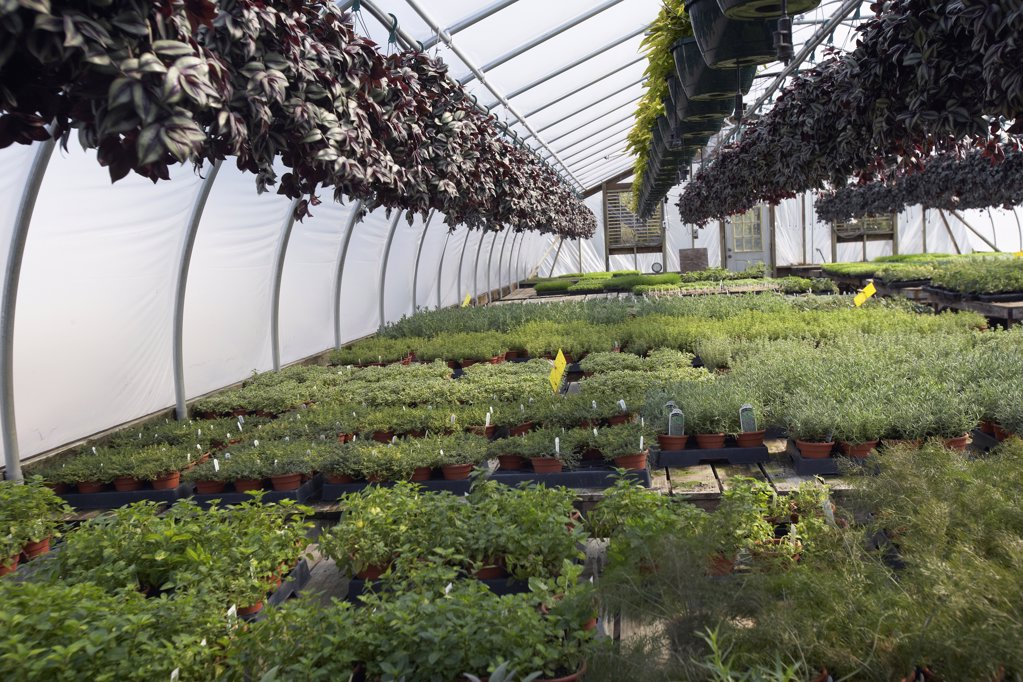 Stock Photo: 1329-1290 Assorted plants in a greenhouse