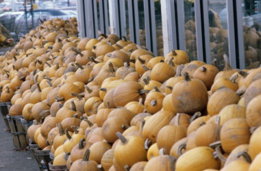 Stock Photo: 1329R-451 Pile of pumpkins