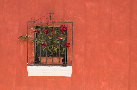 Stock Photo: 1336-1133 Flower pot on a window sill, Antigua, Guatemala