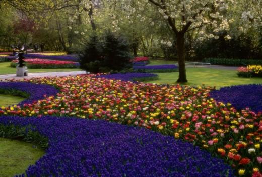 Stock Photo: 1336-636 Tulips Keukenhof Garden Netherlands