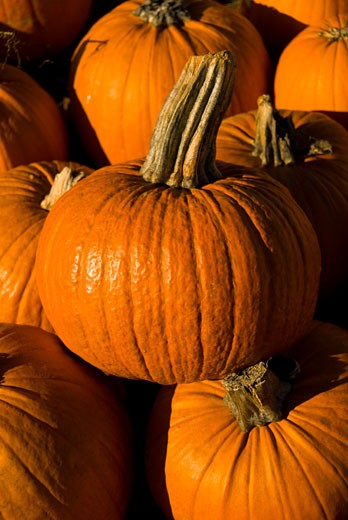 Stock Photo: 1336-966 Close-up of harvested pumpkins