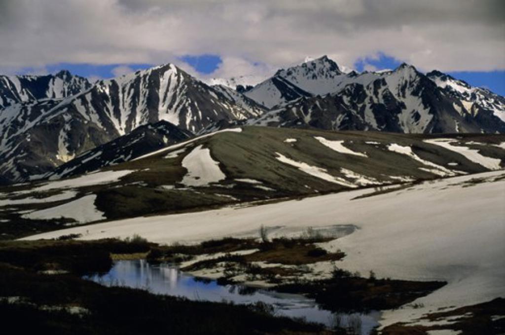 Stock Photo: 1339-201 Denali National Park  Alaska USA