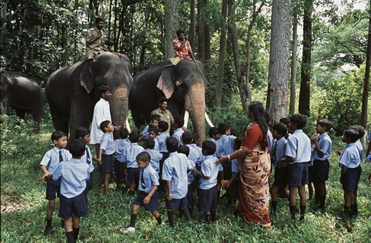 Stock Photo: 1340-897 School children looking at elephants at a traditional Elephant Day celebration, Indira Gandhi National Park, Coimbatore, Tamil Nadu, India