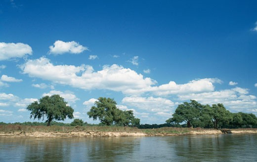 Stock Photo: 1344-1004 Reflection of trees in a river, Zambezi River, Mana Pools National Park, Zimbabwe