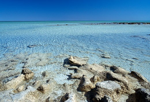 Stock Photo: 1344-653 Panoramic view of the sea, Stromatolites, Hamelin Pool, Shark Bay World Heritage Area, Western Australia, Australia