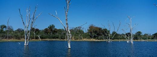Bare trees in a lake, Lake Kariba, Matusadona National Park, Zimbabwe : Stock Photo
