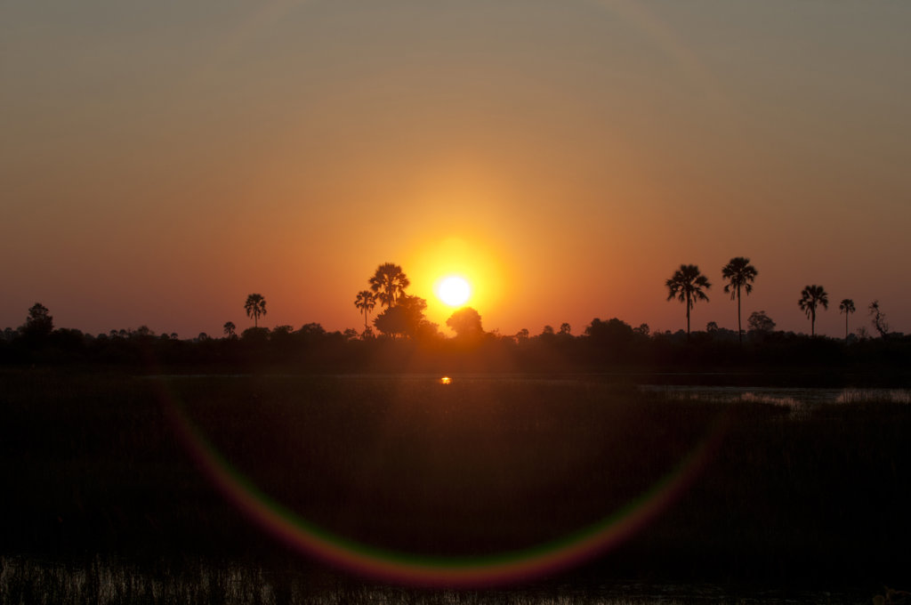 Stock Photo: 1345R-1867 Silhouette of trees at sunrise, Abu Camp, Okavango Delta, Botswana