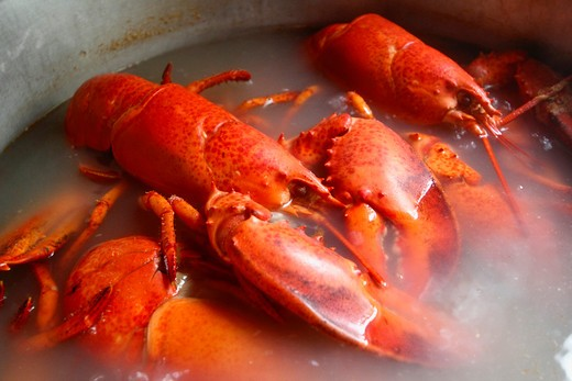 Stock Photo: 1346-1176 Lobsters being boiled in a pan