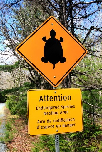 Stock Photo: 1346-1416 Sign warning about an endangered Blanding's Turtle nest