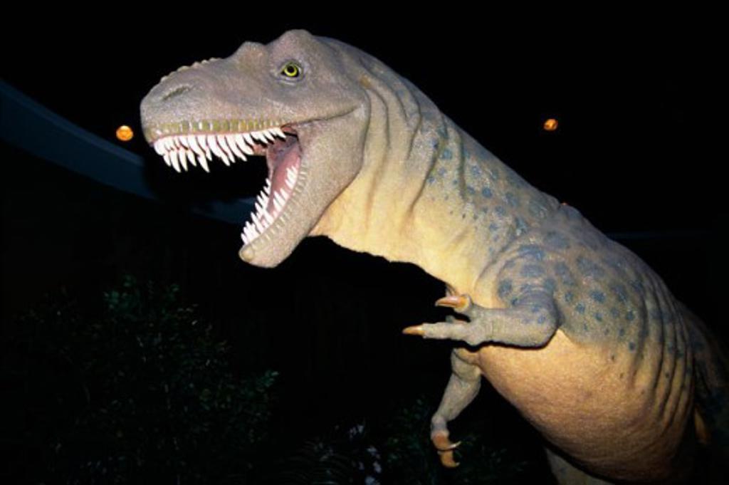 Stock Photo: 1346-299 Albertosaurus, Royal Tyrrell Museum, Drumheller, Alberta, Canada
