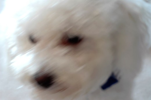 Close-up of a puppy : Stock Photo