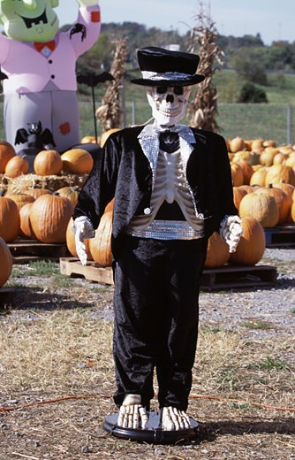 Human skeleton in a pumpkin patch : Stock Photo