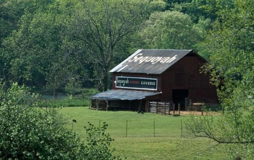 Advertising on an old barn, Alabama, USA : Stock Photo
