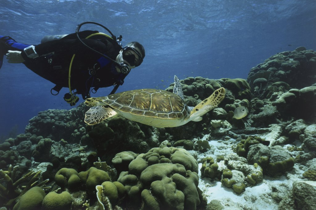 Stock Photo: 1380-265 Close-up of a sea turtle and a scuba diver underwater