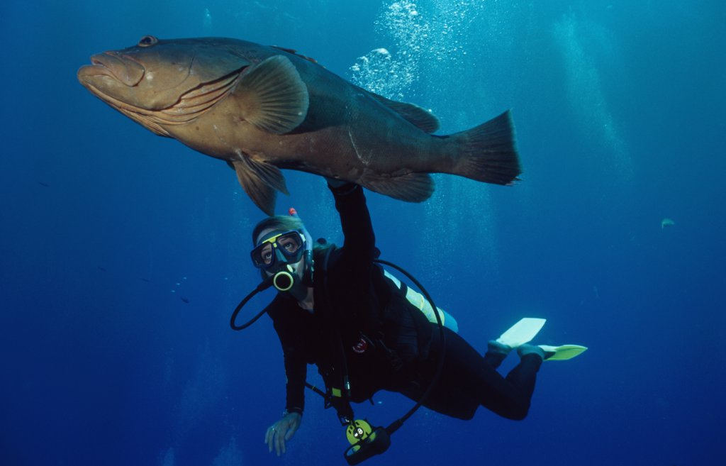 Low angle view of a scuba diver and a fish underwater, Cayman Islands : Stock Photo