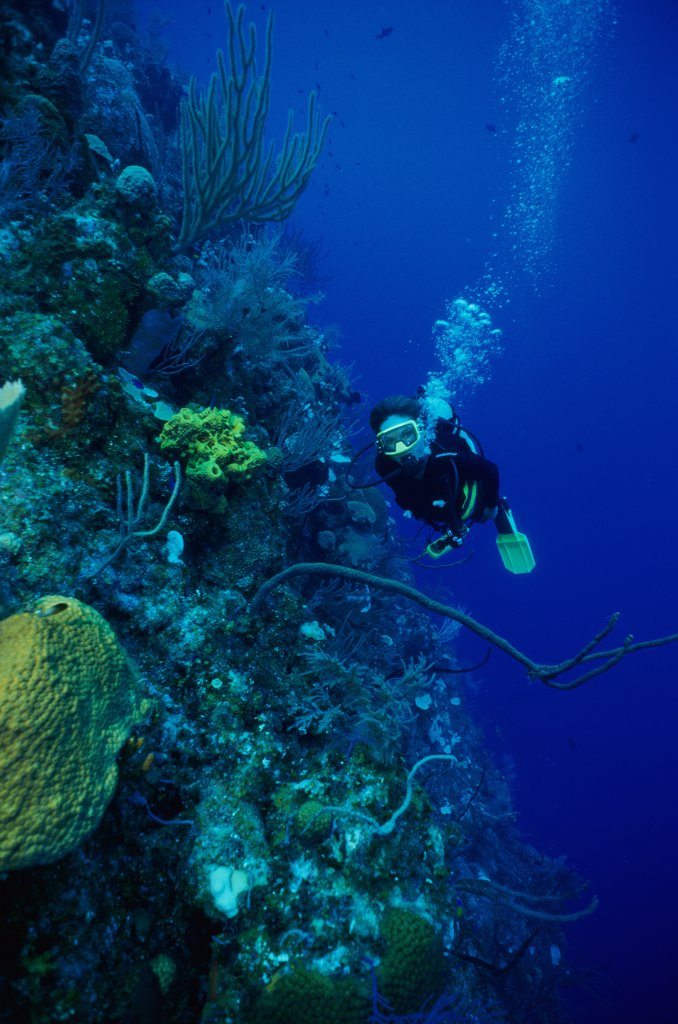 High angle view of a scuba diver underwater, Cayman Islands : Stock Photo