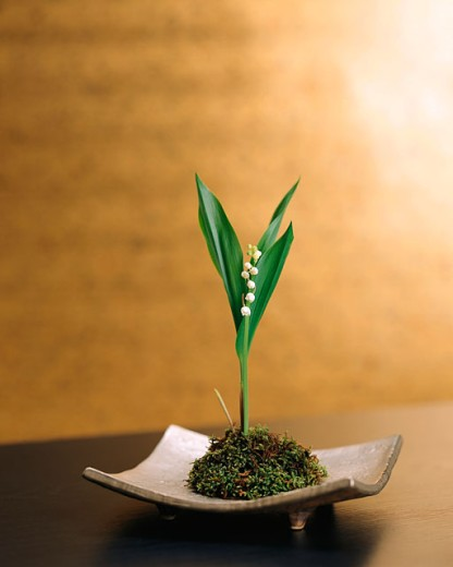 Lily of the Valley     : Stock Photo