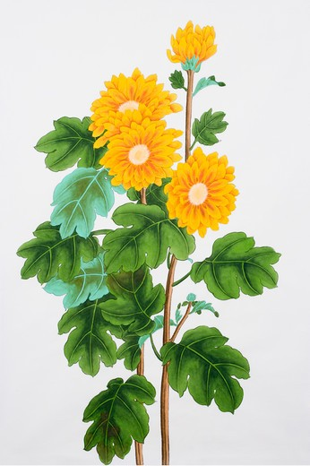 Stock Photo: 1397R-69722 Chinese Fine art, Traditional Chinese Painting, Chrysanthemum